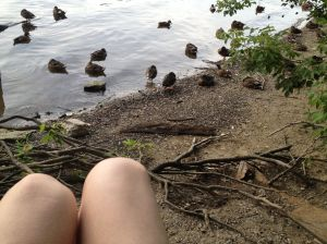 Pictured: my knees and some sleeping ducks. Not pictured: another thirty or forty sleeping ducks off the right frame of this photo.